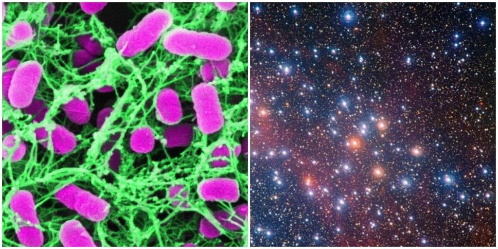 Se calcula que hay más microorganismos en la Tierra que estrellas en el universo