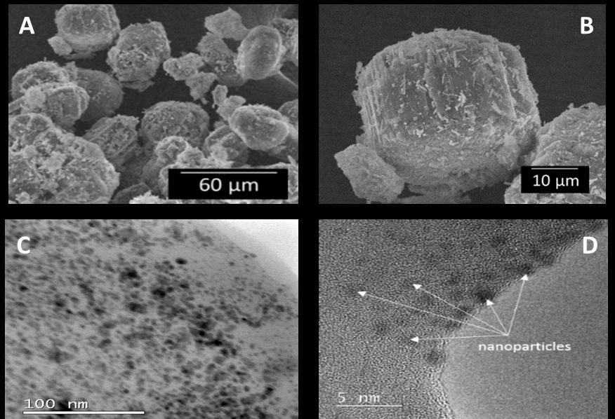 Nanocompuesto con nanopartículas de Plata. A y B) Cristales de mordenita-AgNPs vistas a través de un microscopio electrónico de barrido (SEM). C y D) Cortes transversales del nanomaterial, donde se observan las AgNPs, vistas a través de un microscopio electrónico de transmisión (TEM). (Tomado de Jaime-Acuña et al., 2016).