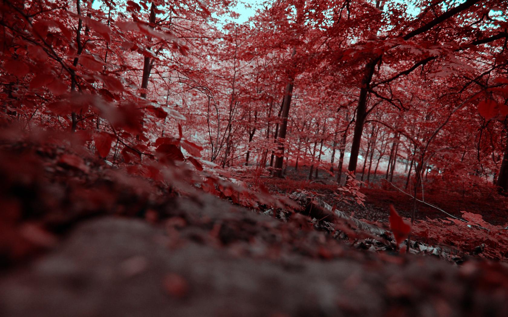 Bosque Rojo donde los árboles toman el color rojizo debido a la contaminación nuclear.