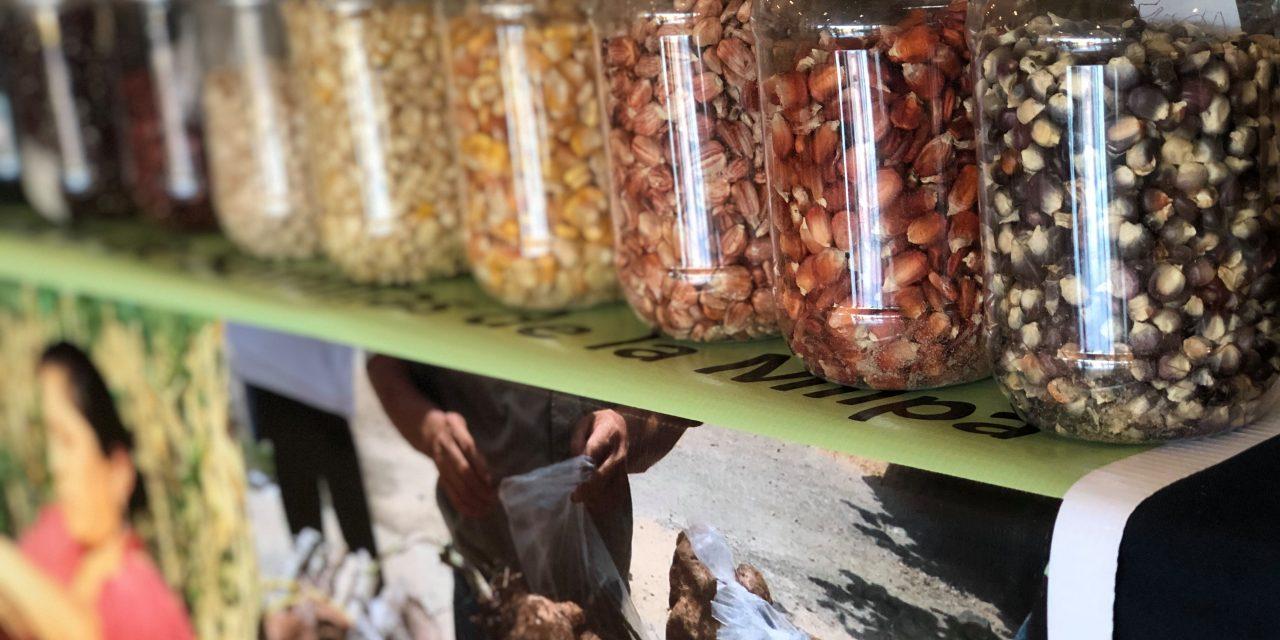 CICY trabaja por preservar la milpa maya