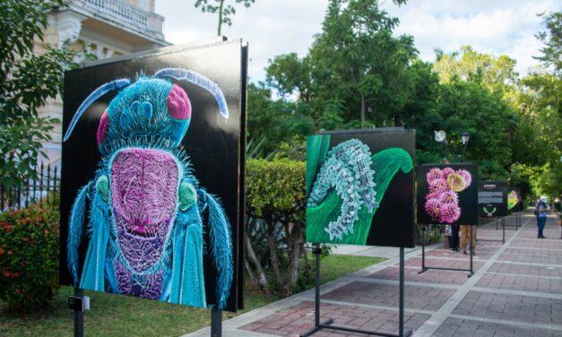 Palacio Cantón se pinta con los colores de La inteligencia de las flores