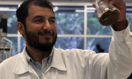 Patentan en Yucatán proceso de producción de bioetanol generado a partir del árbol de ramón