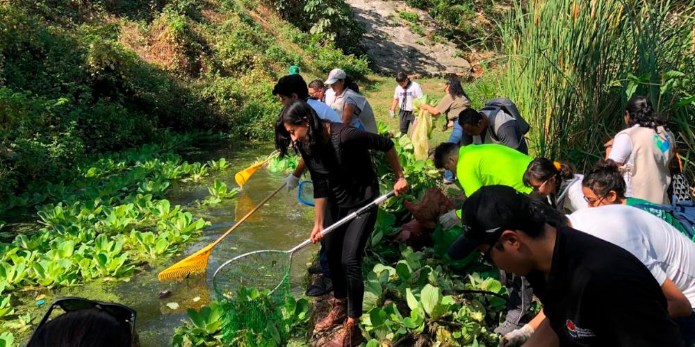 CICY y Ayuntamiento de Benito Juárez presentan Semáforo de condición de cenotes urbanos