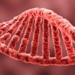 ¿Qué son y cómo funcionan los relojes biológicos?
