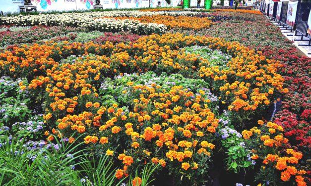¿Qué pasaría si perdiéramos a las plantas para siempre?